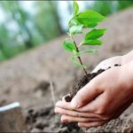 شجرکاری مہم، 10کروڑ پودے لگانے کی منظوری